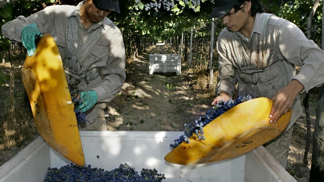 De l'Argentine au Japon, une viticulture vulnérable face à Dame Nature