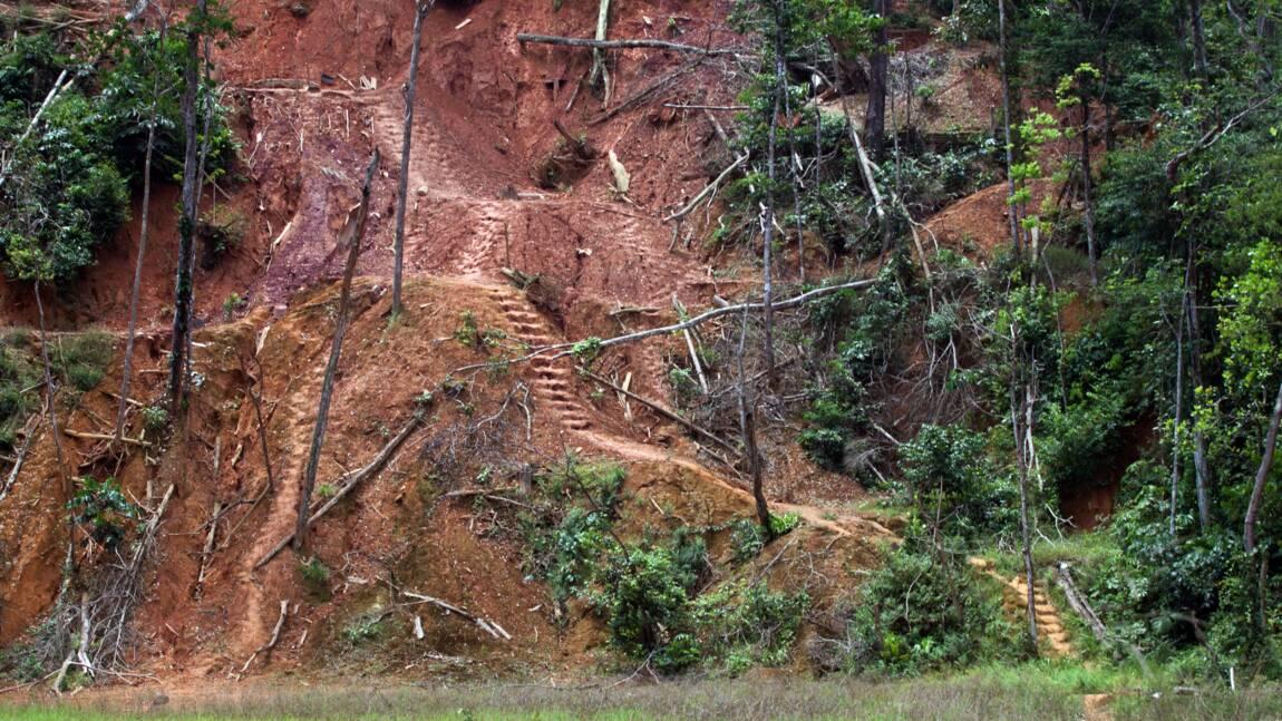 Mine d'or en Guyane: France Nature Environnement réclame un débat public