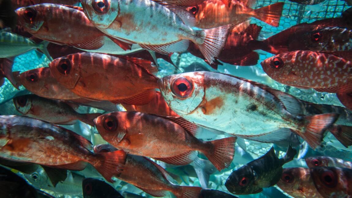 Un homme d'affaires chinois va investir 1,5 milliard de dollars dans le poisson polynésien