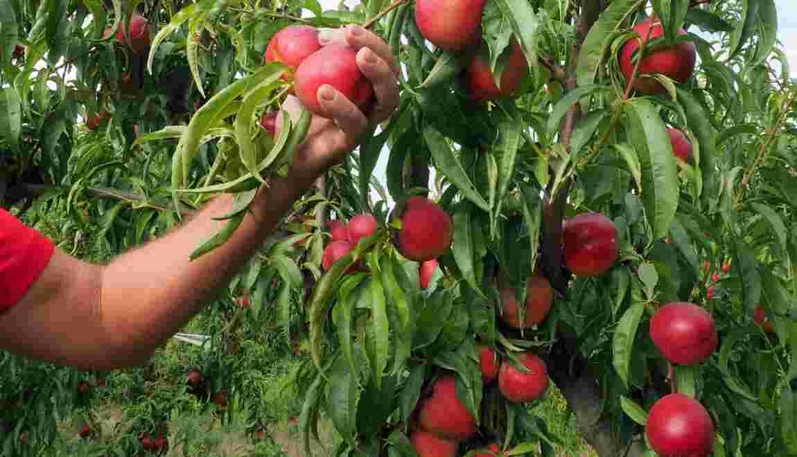 Le boom de l'agriculture bio en Europe