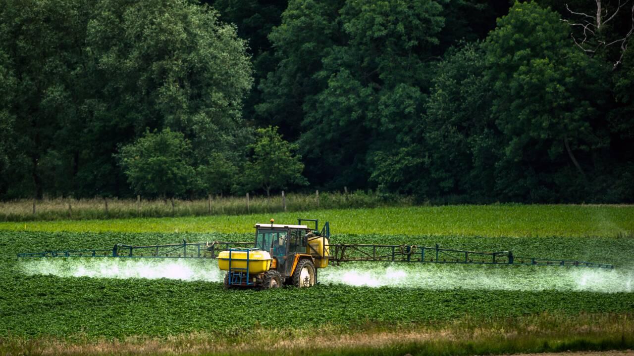 Les pesticides à l'origine d'un surpoids chez les souris mâles