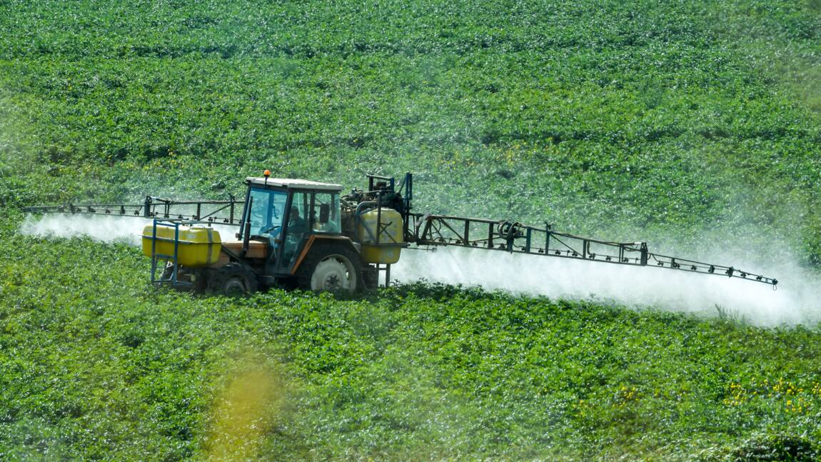 Le Conseil constitutionnel valide l'interdiction d'exporter des pesticides prohibés dans l'UE