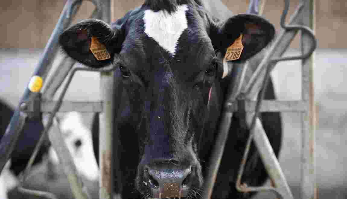 Le lait issu des pâturages, plus écolo et plus rentable