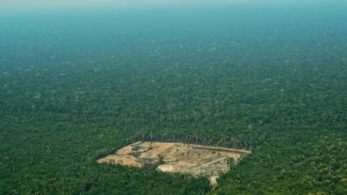 Brésil: la déforestation de l'Amazonie a presque doublé en un an