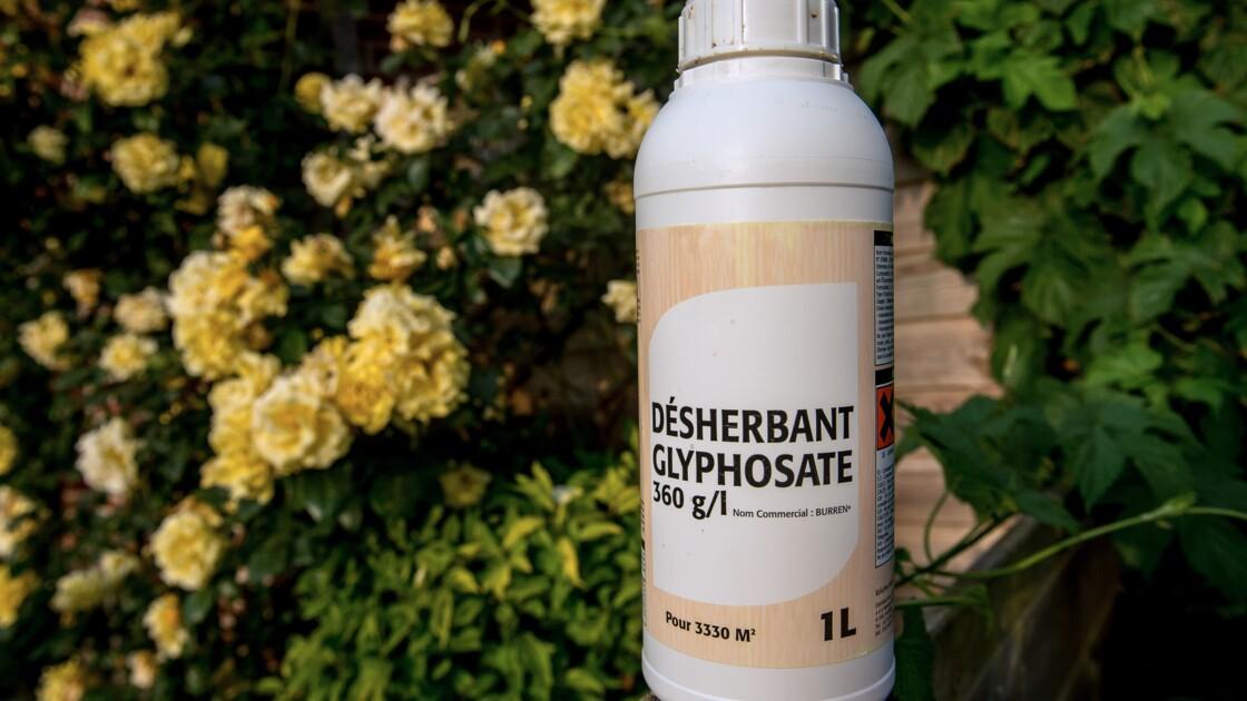 """Des militants écologistes insistent sur une """"sortie"""" du glyphosate"""