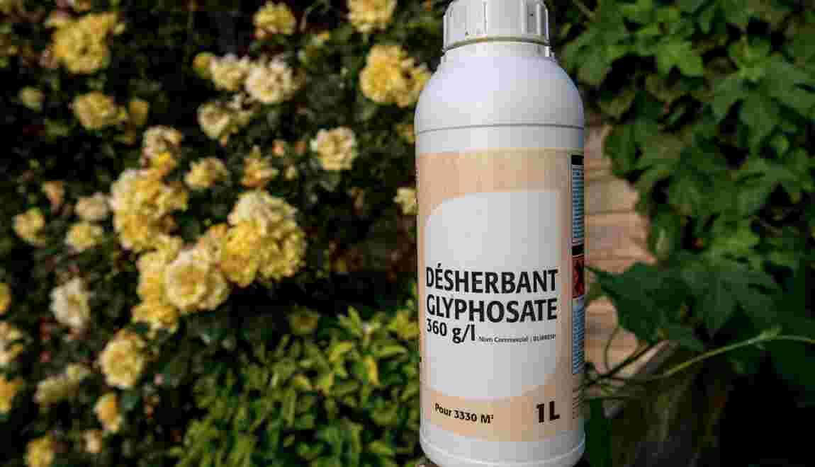Glyphosate: Bruxelles propose une licence de 5 ans, vote le 9 novembre