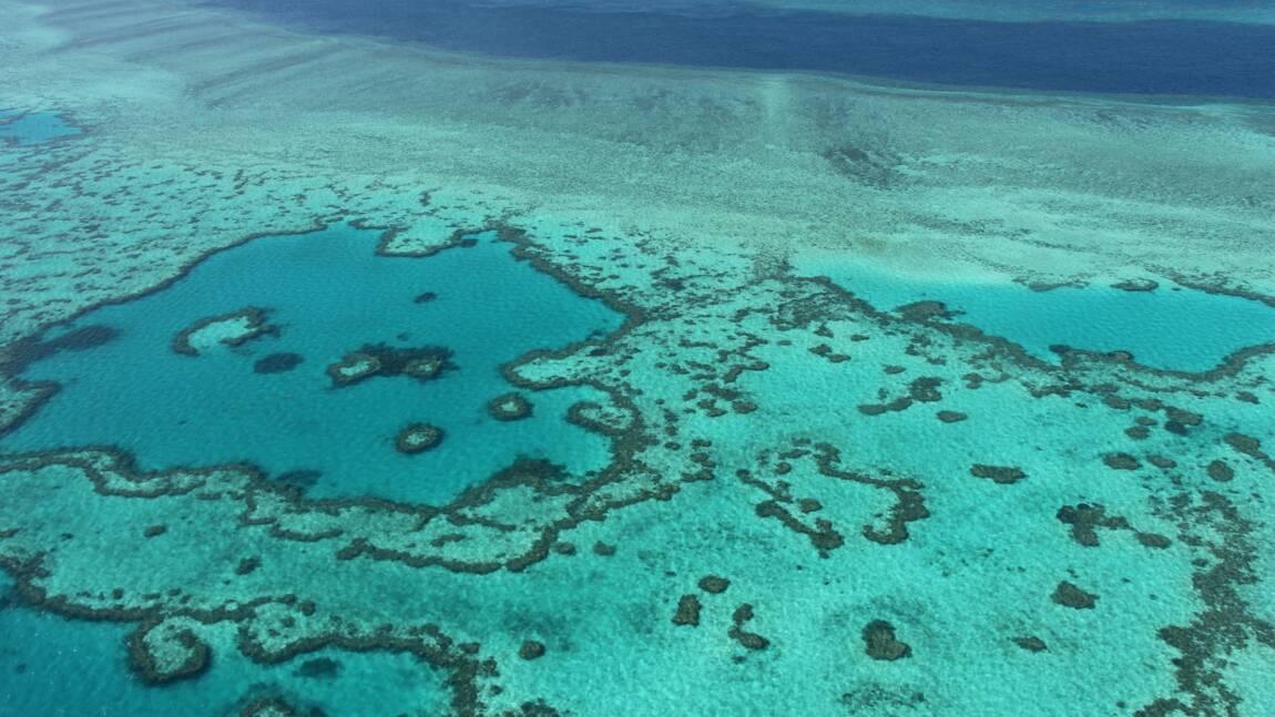 Grande Barrière: des écologistes en appellent à l'Unesco