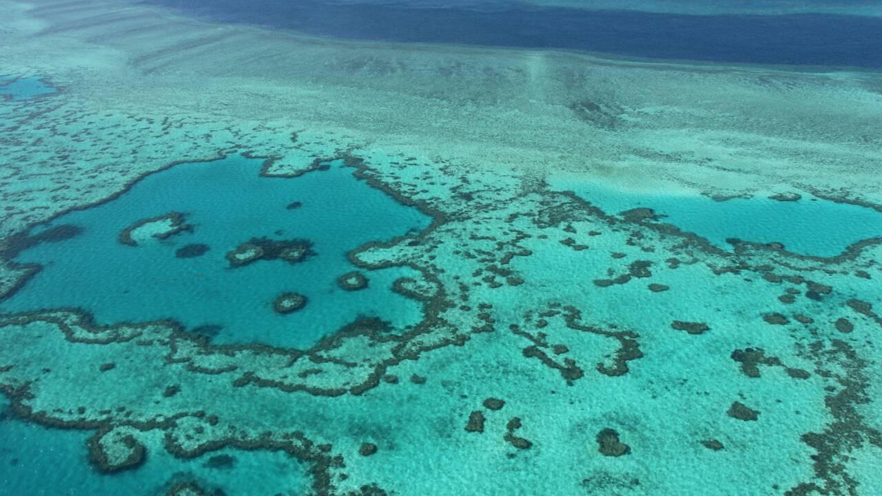 Grande barrière: des chercheurs réussissent à transplanter du corail