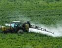 """Pesticides: l'Etat imposera des """"zones de non traitement"""" si pas d'accords locaux"""