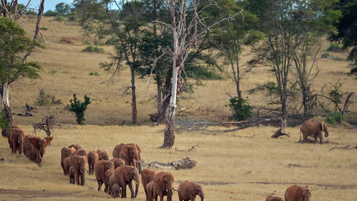 La faune sauvage, victime collatérale des guerres