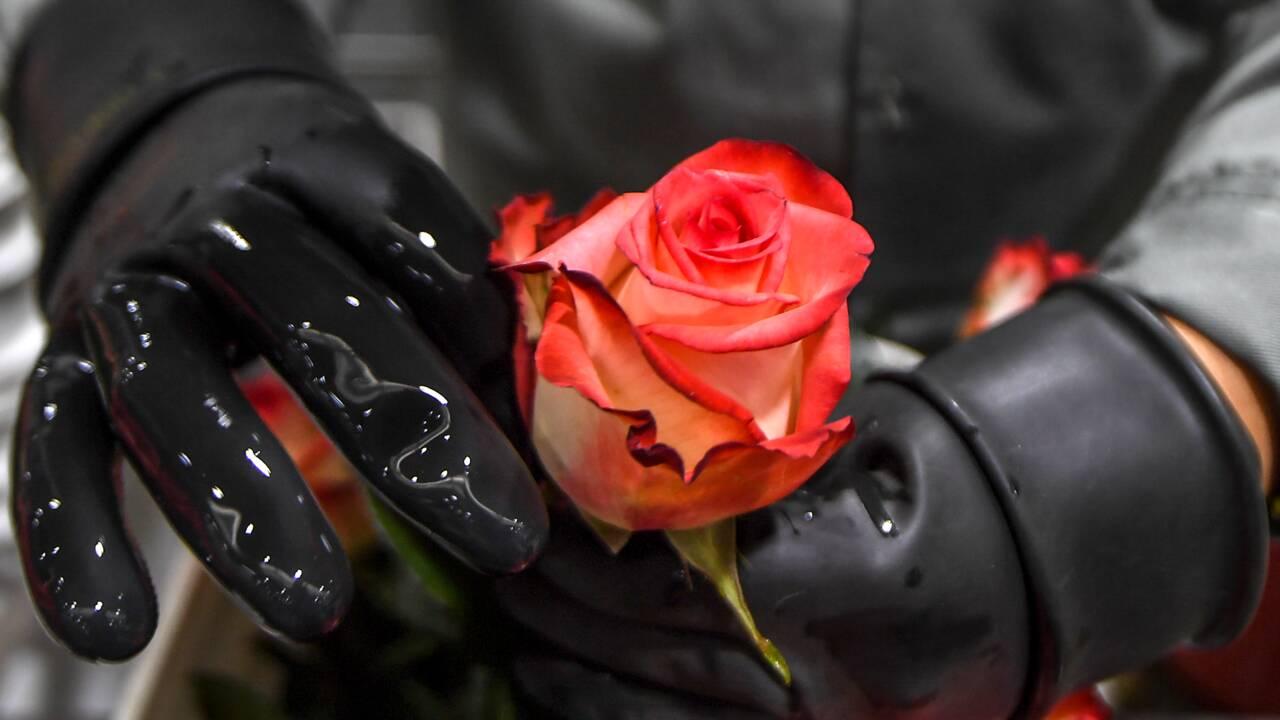 Saint-Valentin: l'important c'est la rose, de préférence équitable