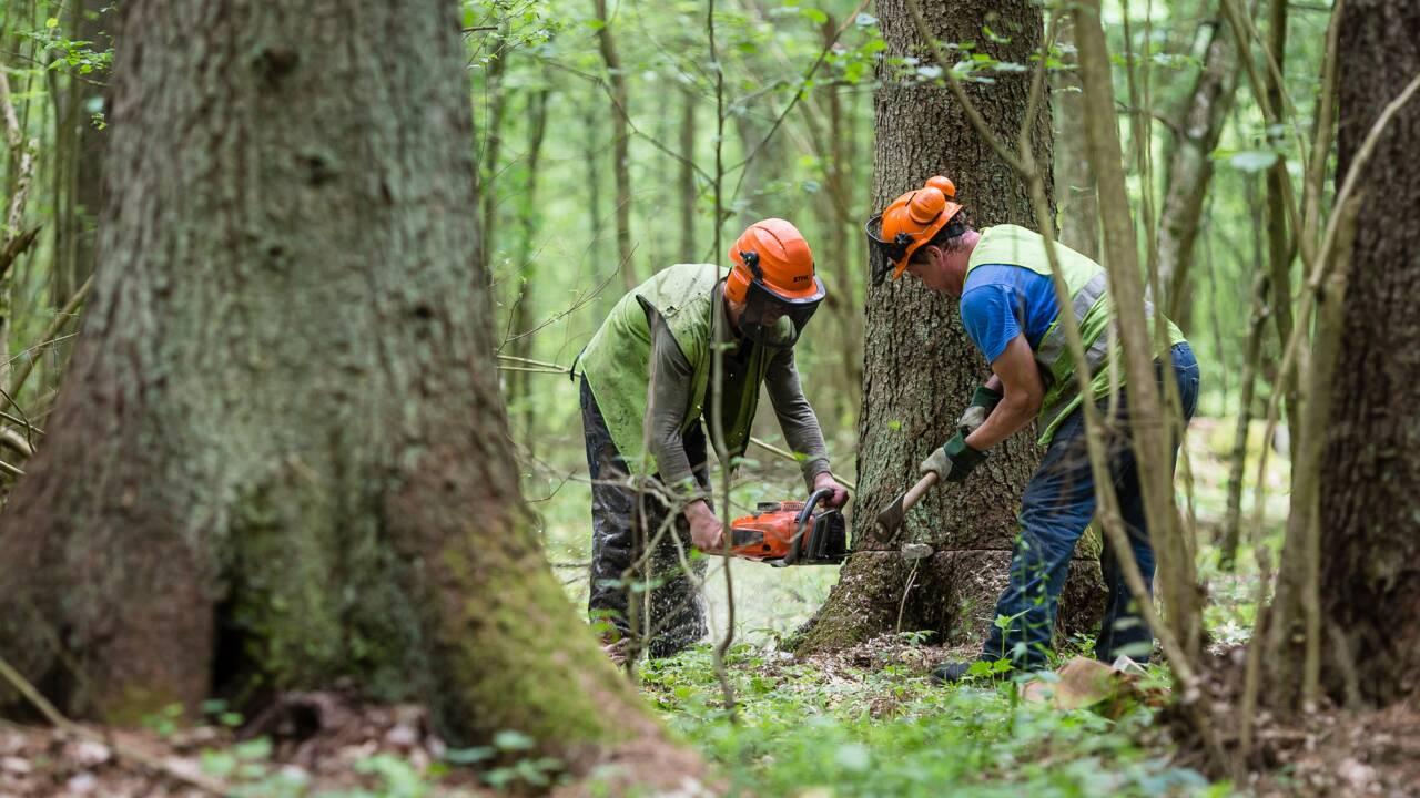 UE: la Pologne condamnée pour ses coupes dans la forêt de Bialowieza