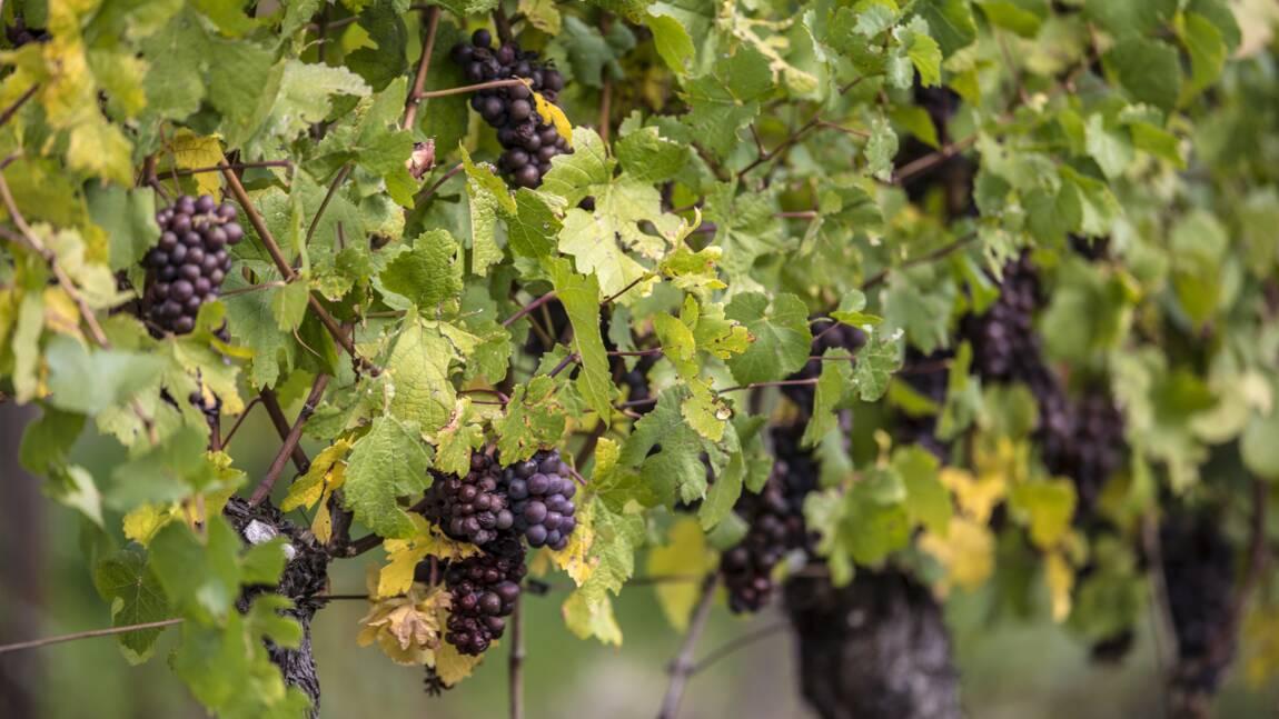 """""""Déguster"""" des pesticides pour dénoncer leur présence dans le vin"""