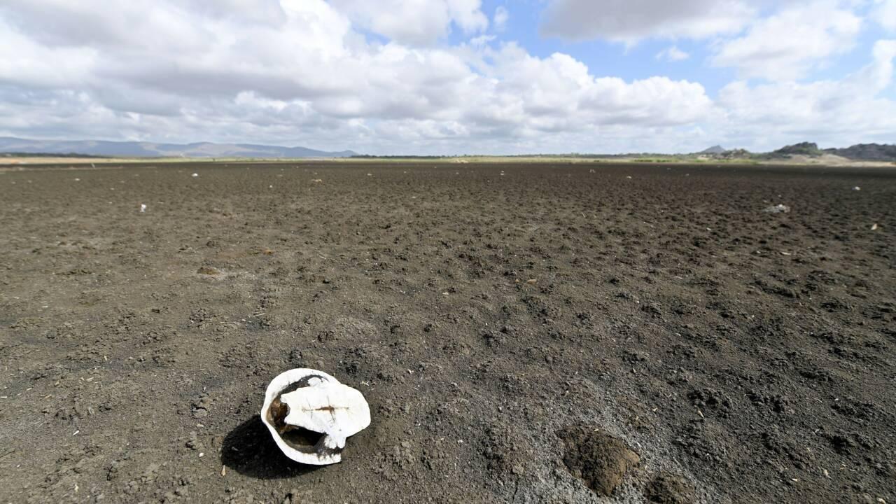 La crise mondiale de l'eau en débat à Brasilia