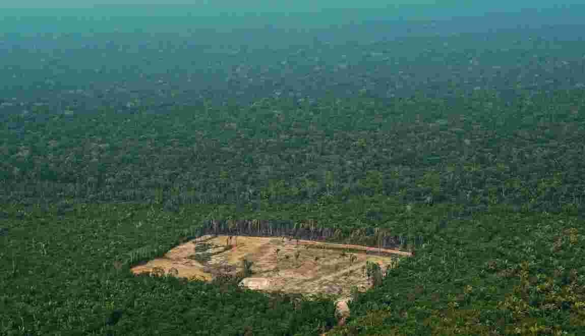 Amazonie : l'exportation de bois exotique alimente trafics et déforestation