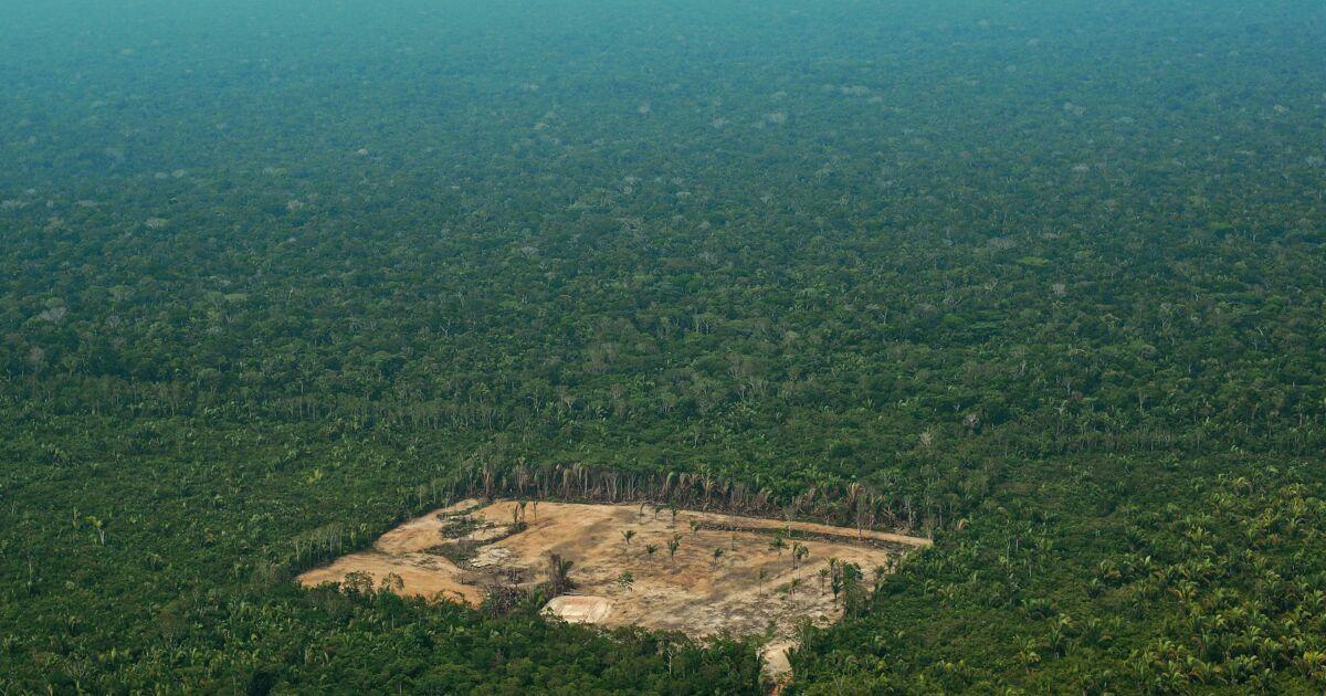 """Déforestation au Brésil : Bolsonaro accusé de """"lâcheté"""""""
