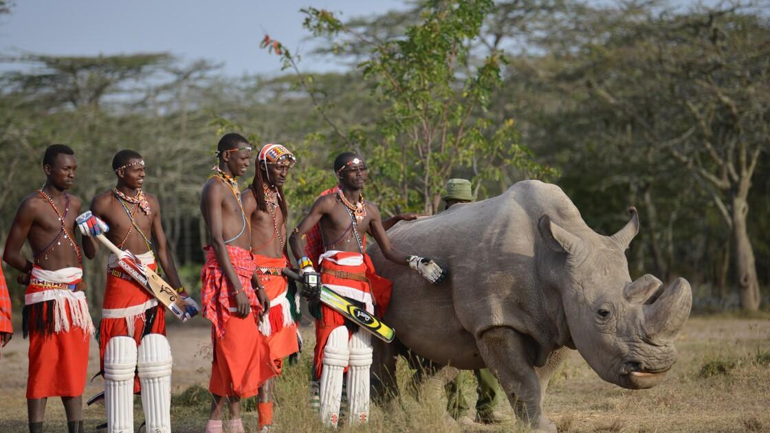 Kenya: Sudan, le dernier mâle rhinocéros blanc du Nord, est mort