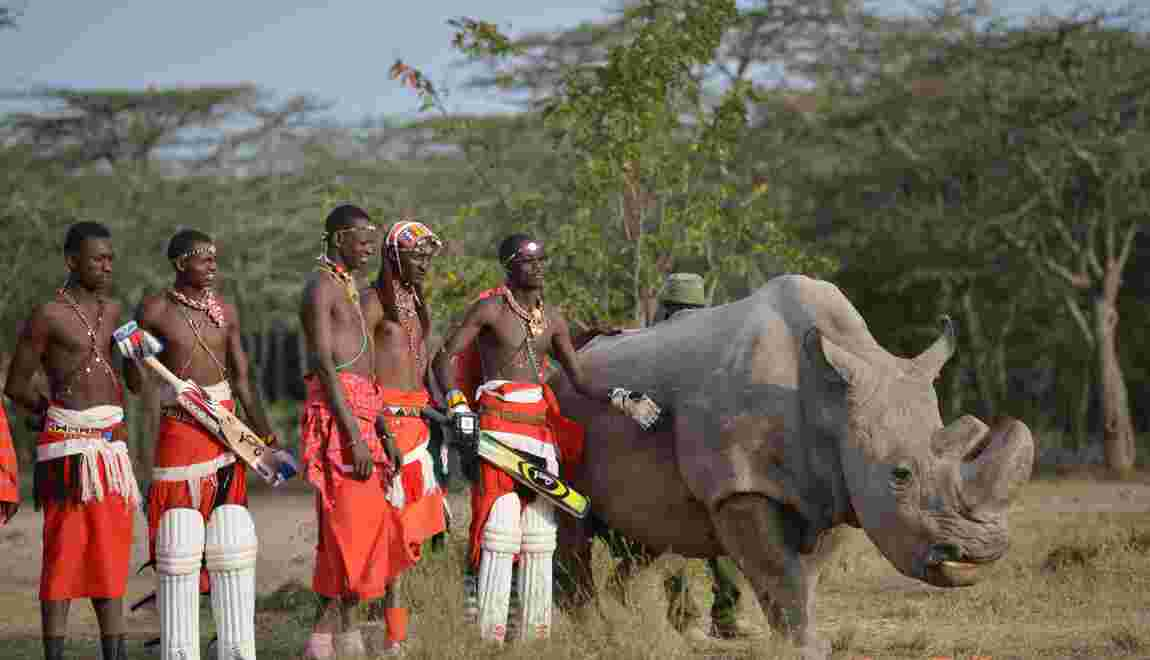 Kenya : mort du dernier rhinocéros blanc du Nord mâle