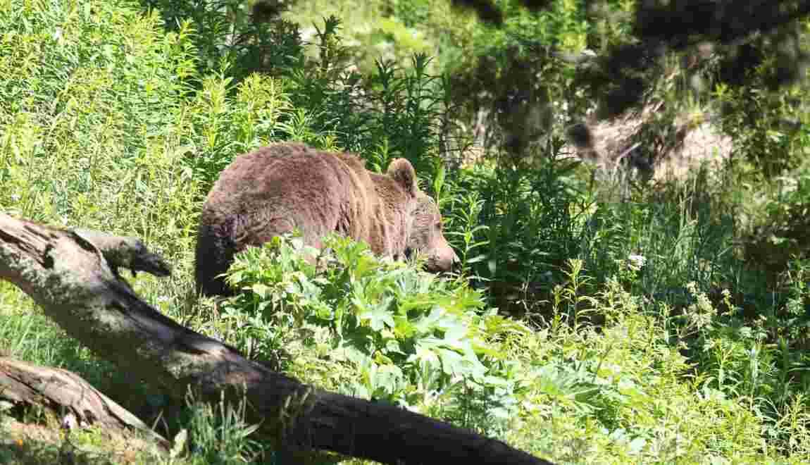 "Barrages anti-ours: Rugy dénonce ""des attitudes inacceptables"""