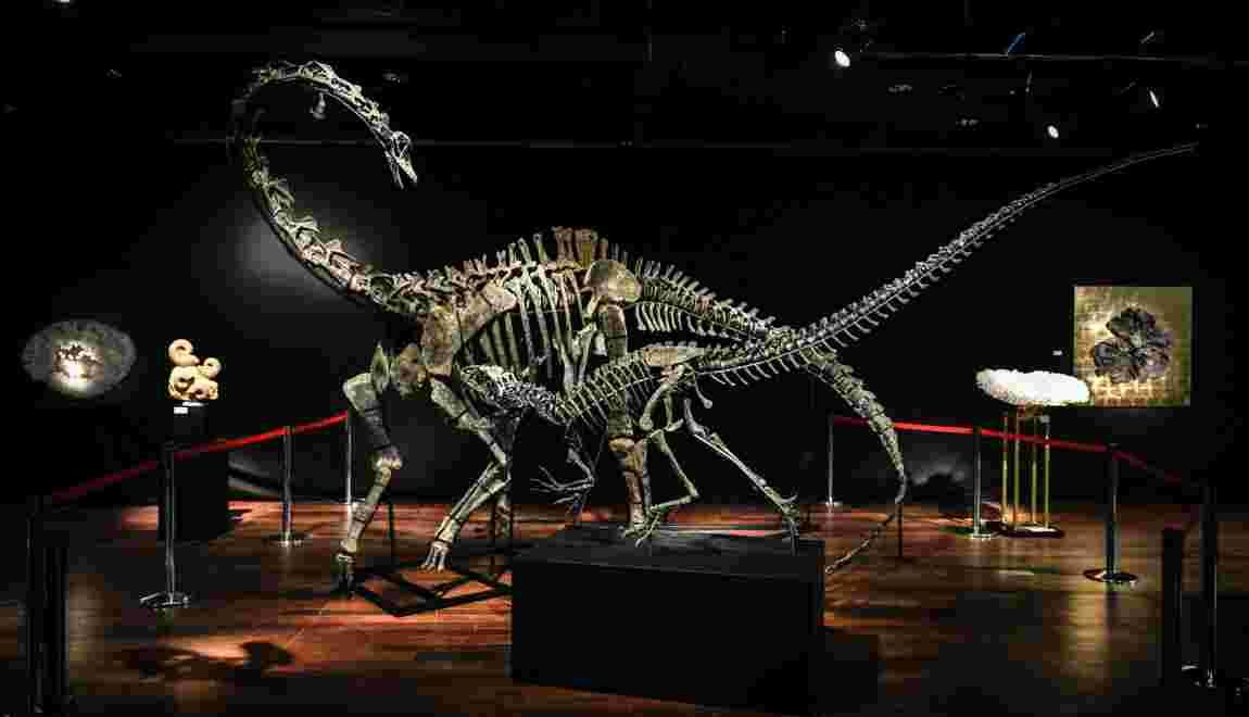 Deux squelettes de dinosaures vendus à plus de 1,4 million d'euros chacun à Paris
