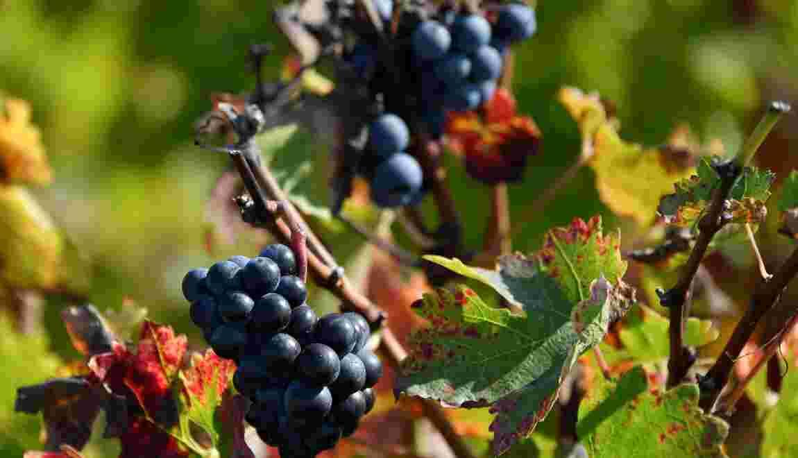 Climat : le goût incertain du vin en 2050