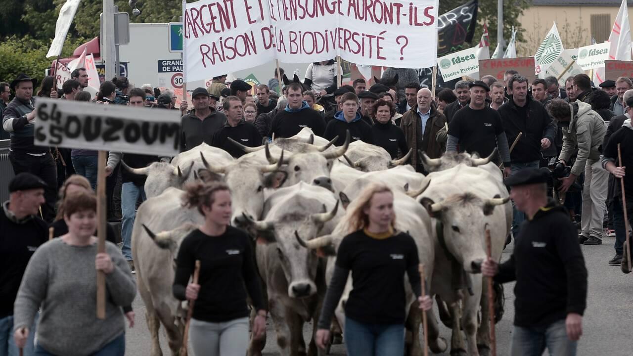 Pau: plus de 1.200 manifestants contre la réintroduction d'ourses en Béarn