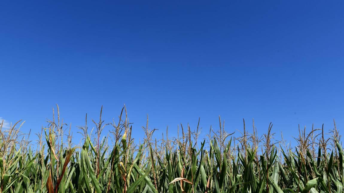 Avec des insectes tueurs, l'agriculture passe au biocontrôle