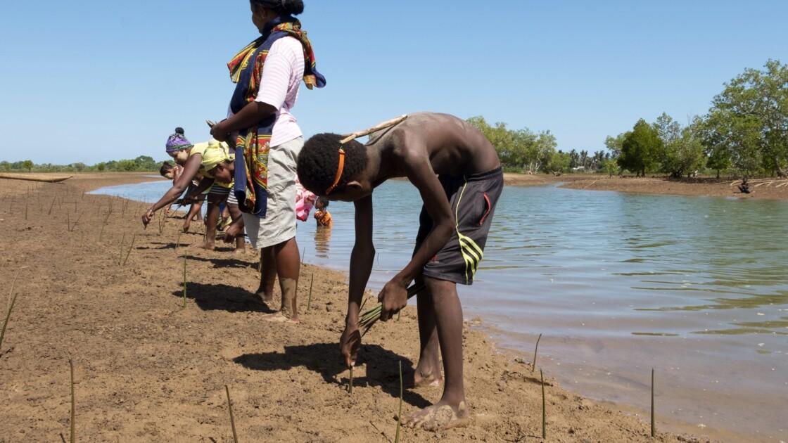 Madagascar: replanter la mangrove pour améliorer le quotidien des pêcheurs