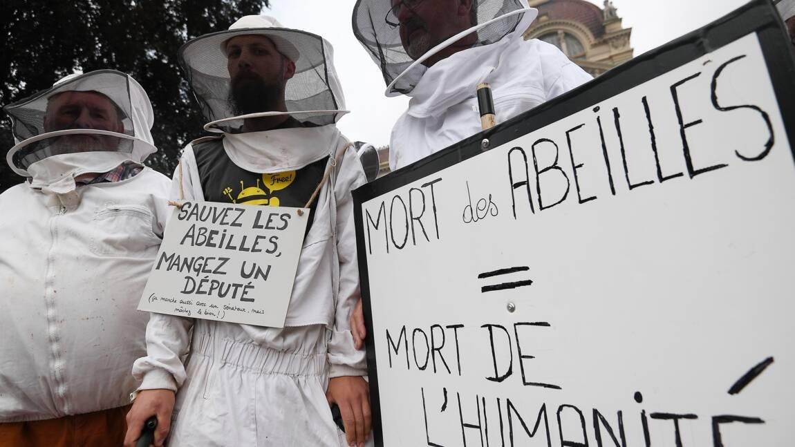 Des apiculteurs lancent un cri d'alarme pour les abeilles