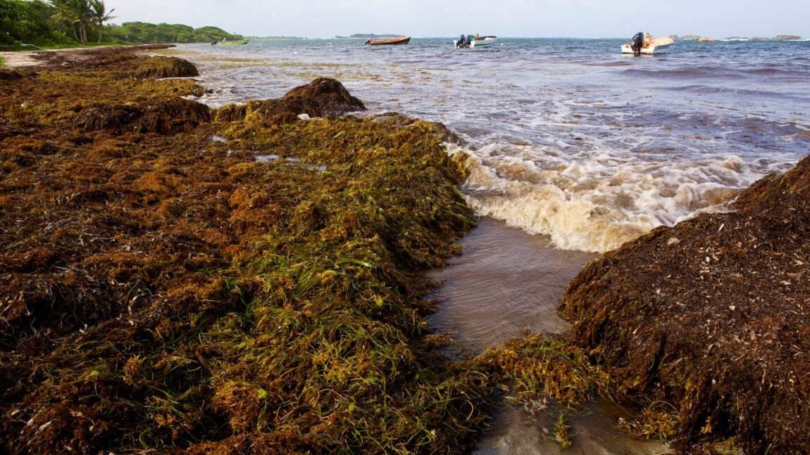 La Guadeloupe prête à se doter d'un aspirateur à sargasses