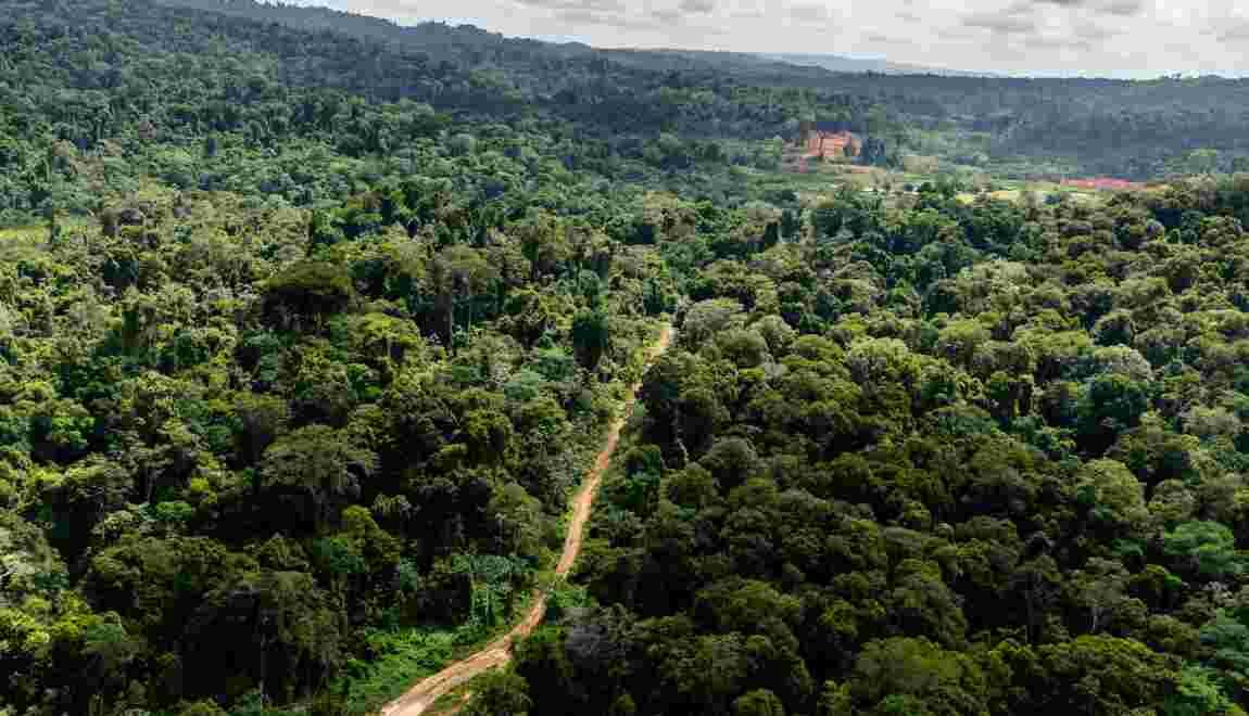 Guyane: le WWF réitère son opposition au projet minier avant le débat public