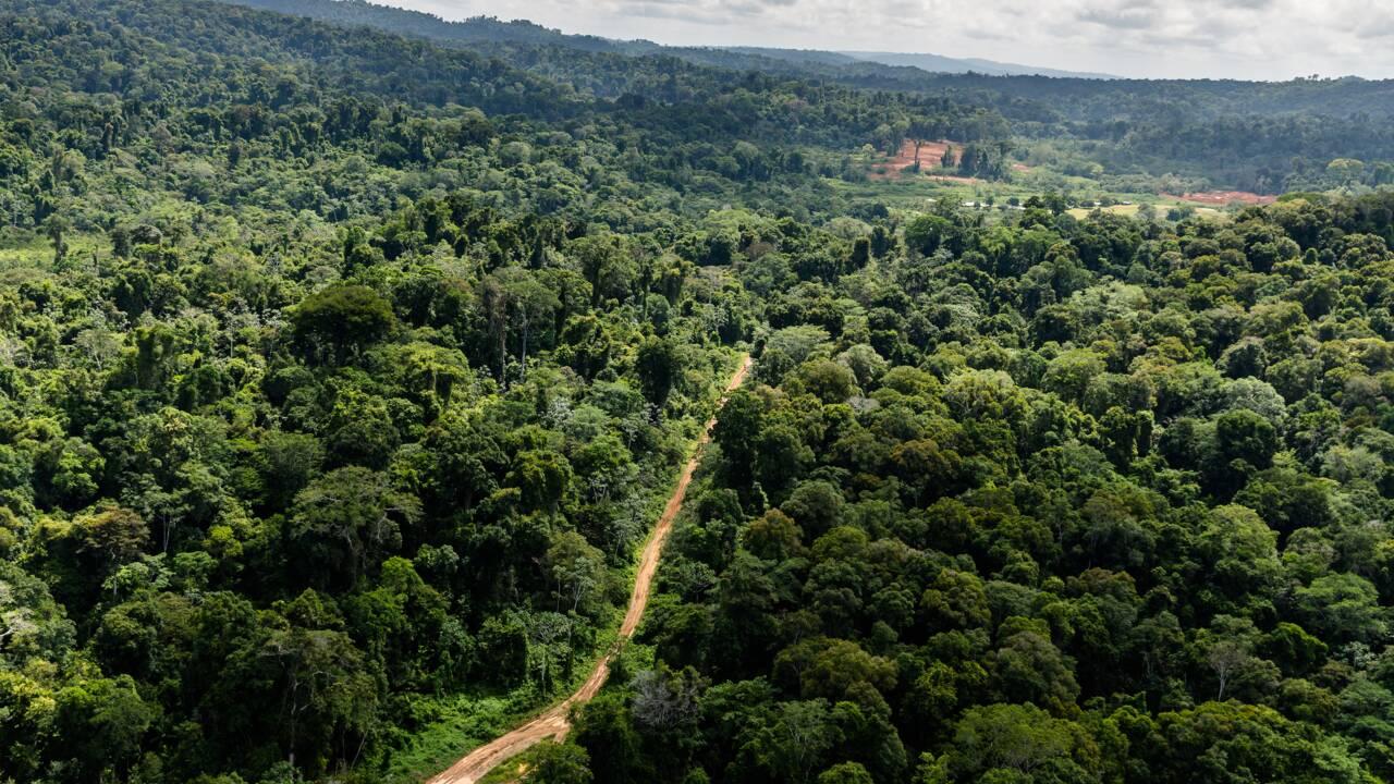 Guyane : Isabelle Autissier opposée au projet Montagne d'or et aux forages Total
