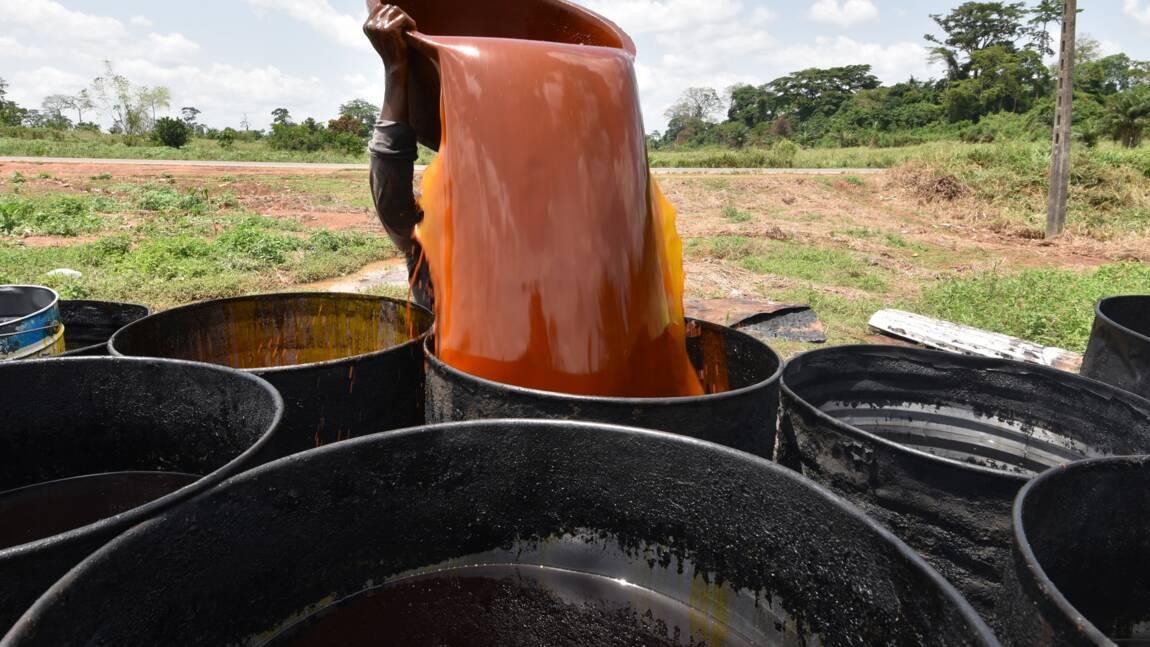 L'huile de palme pourrait-elle devenir durable? La voie s'avère étroite