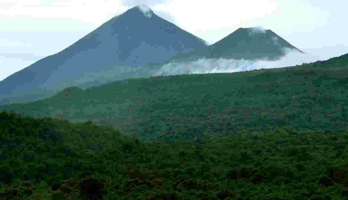 """RDC: Greenpeace demande """"la restitution"""" immédiate de 24 concessions forestières"""