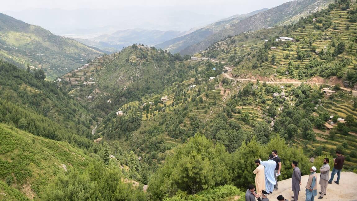 Au Pakistan, des centaines de millions d'arbres plantés contre la déforestation