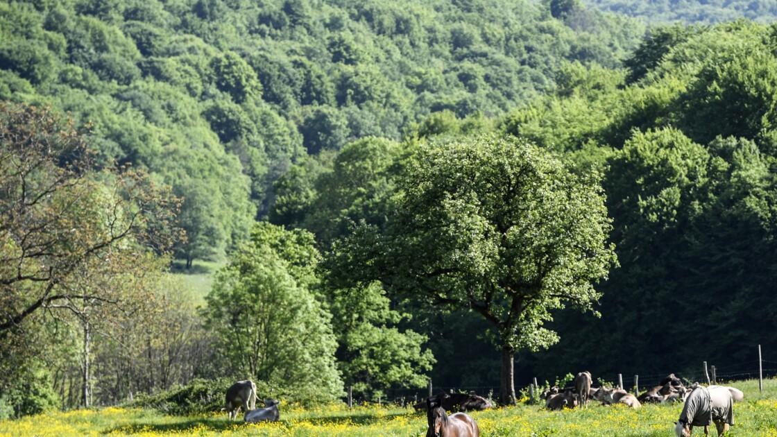 A quoi ressemblera le futur parc national des forêts de Champagne-Bourgogne ?