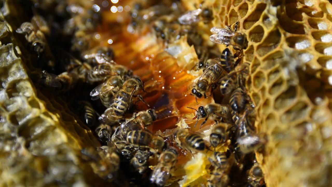 """Glyphosate dans du miel : enquête pour """"administration de substances nuisibles"""""""