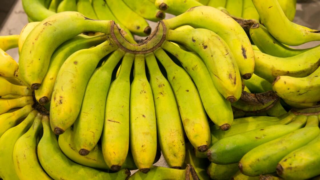 Le chlordécone, un pesticide à la dangerosité démontrée