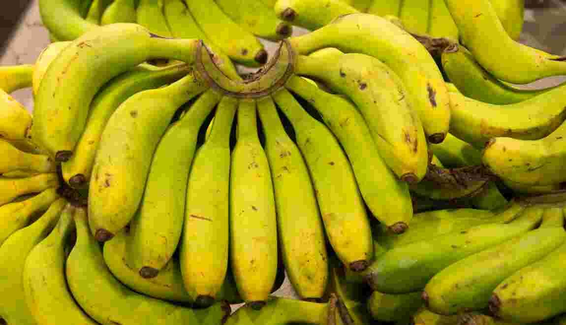 Chlordécone: le gouvernement va revoir les limites autorisées dans les aliments