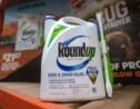 Monsanto fait appel de sa condamnation dans le procès Roundup