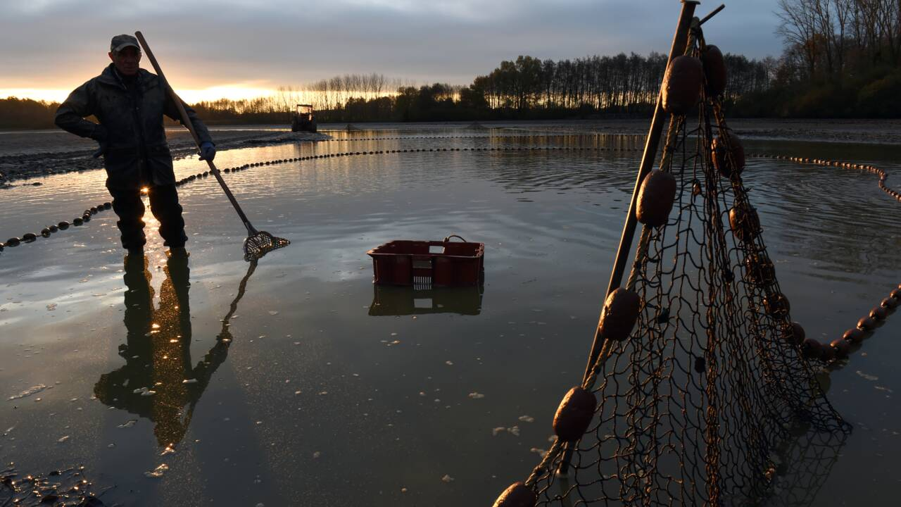 Face à l'appétit mondial pour le poisson, l'agroécologie à la rescousse