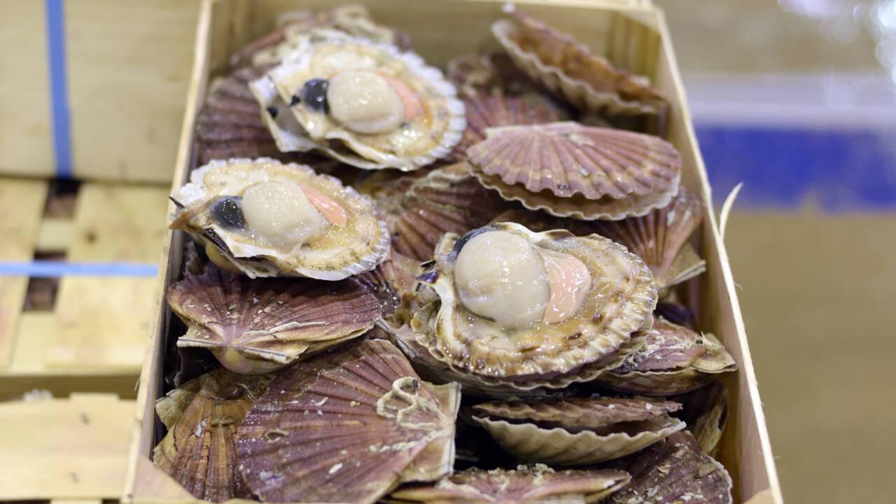 """Saint-Jacques: réunion """"la semaine prochaine"""" des pêcheurs anglais et français"""
