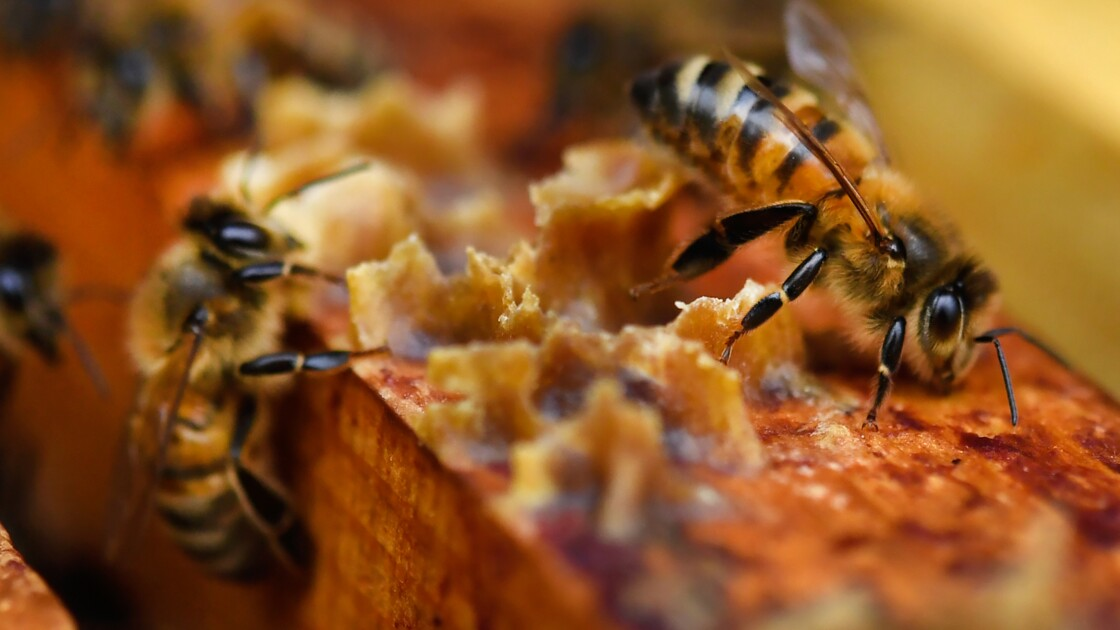 Les néonicotinoïdes désormais interdits dans l'agriculture française