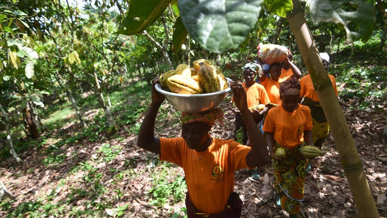 Retard à l'allumage pour une norme européenne du cacao durable