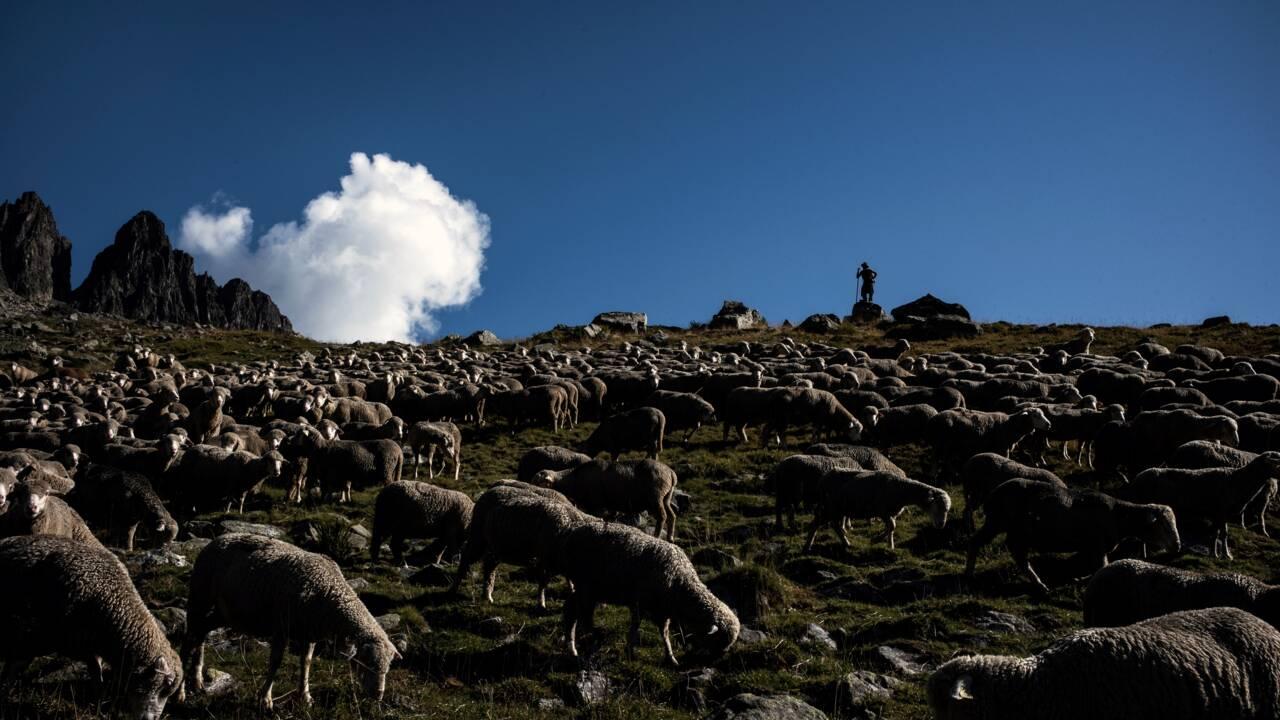 """Un nouveau plan """"ours"""" qui ne satisfait ni les éleveurs ni les ONG"""