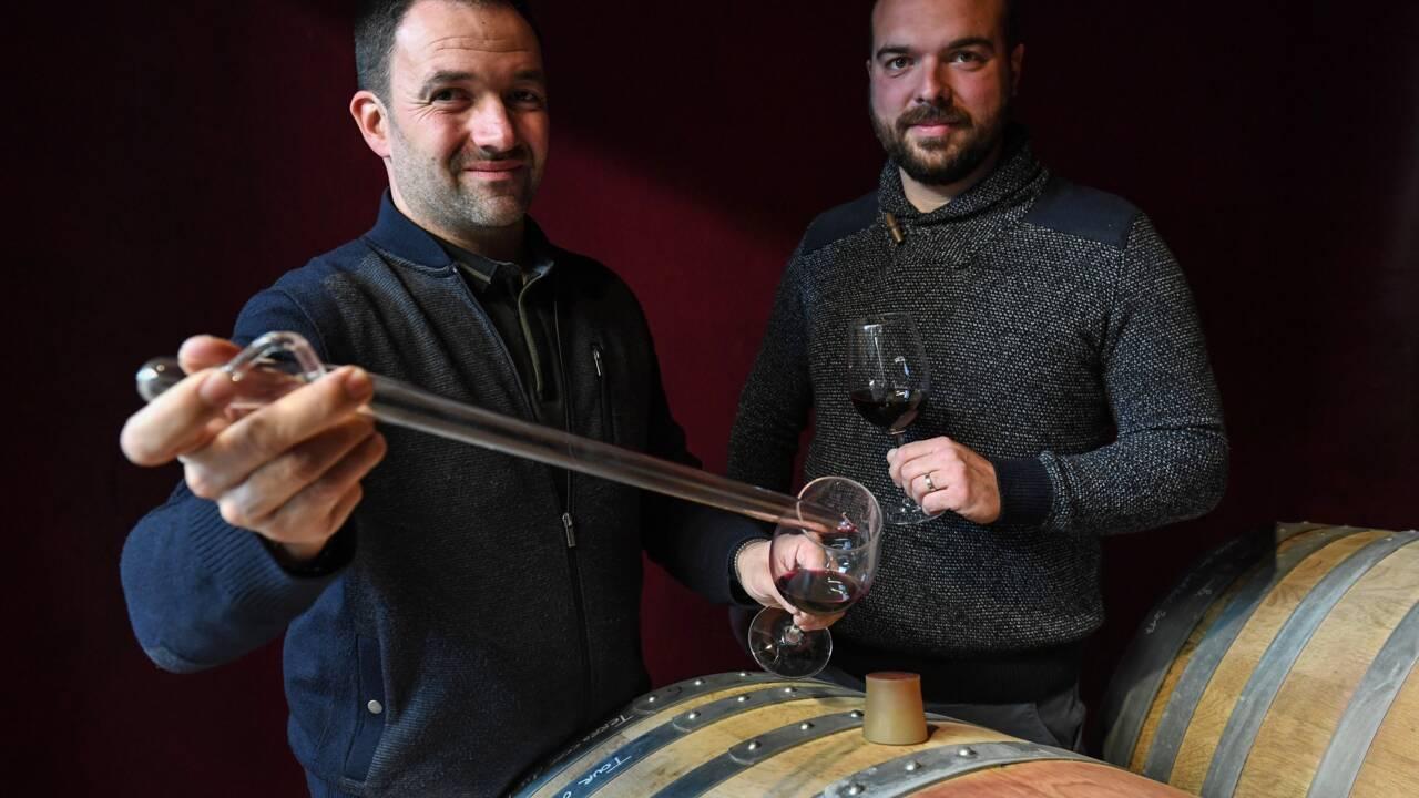Benjamin et Valentin, viticulteurs: une persévérance récompensée par le label bio