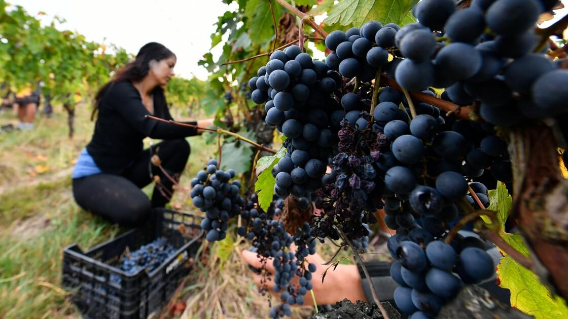 """L'agriculture biologique française a connu une """"année record"""" en 2018"""