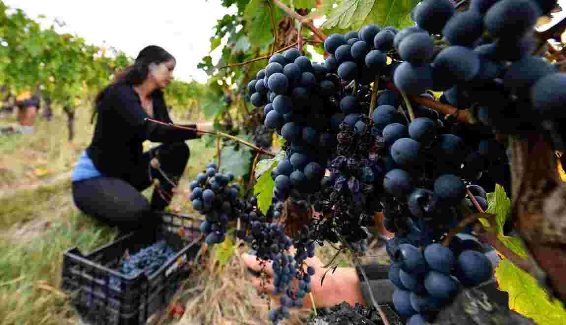 L'agriculture bio fait un grand bond dans les champs français