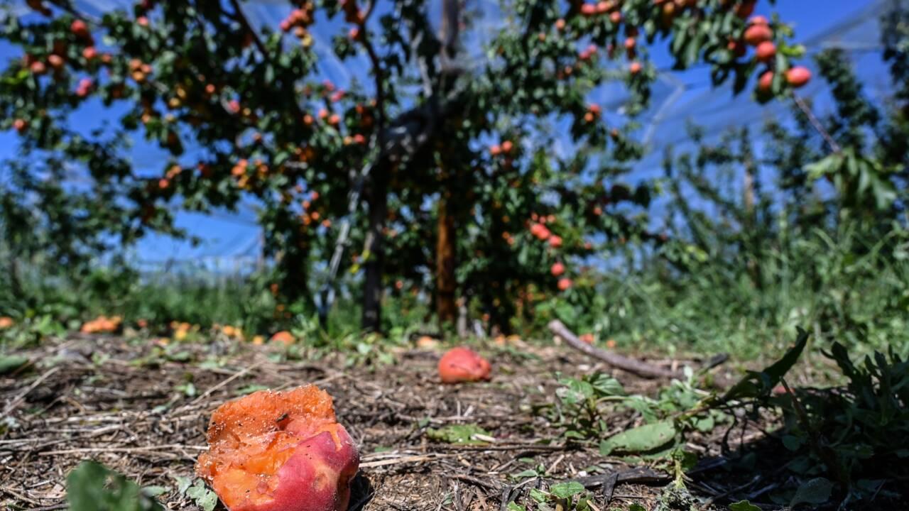 """Intempéries en Rhône-Alpes: l'agriculture """"en souffrance"""" face à des pertes colossales"""