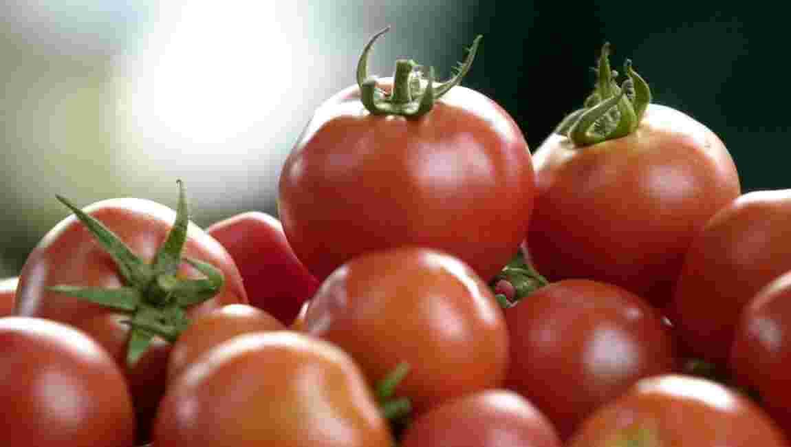 Bio: pas de tomates en hiver sous les serres chauffées